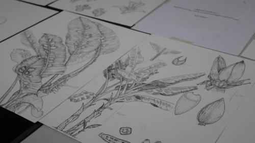 การฟังบรรยายหลักการการวาดภาพทางวิทยาศาสตร์ โครงการอบรมเชิงปฏิบัติการการวาดภาพทางวิทยาศาสตร์